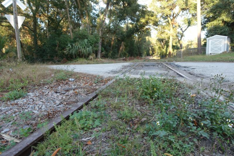Overgrown track  Deland RR Spur to St Johns River-to-Sea Loop